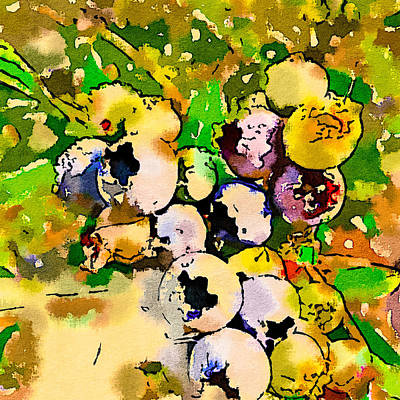 Photograph - Blueberry Sketch by Ronda Broatch