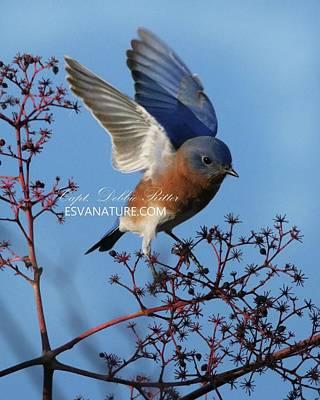 Photograph - Bluebird 5349 by Captain Debbie Ritter
