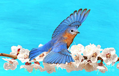 Bluebird Photograph - Bluebird And Blossoms by Laura D Young
