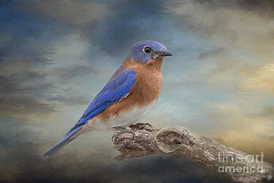 Bluebird Of Happiness Photograph - Bluebird And Blue Skies by Bonnie Barry