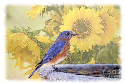 Bluebird And Sunflowers Art Print by Bonnie Barry