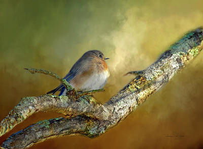 Photograph - Bluebird Contemplation by Bellesouth Studio