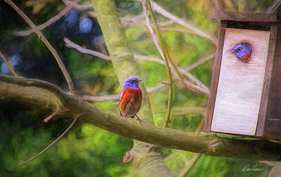 Photograph - Bluebird Couple At Home by Diana Haronis