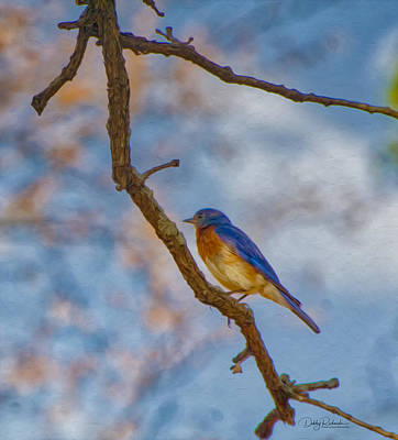 Photograph - Bluebird by Debby Richards