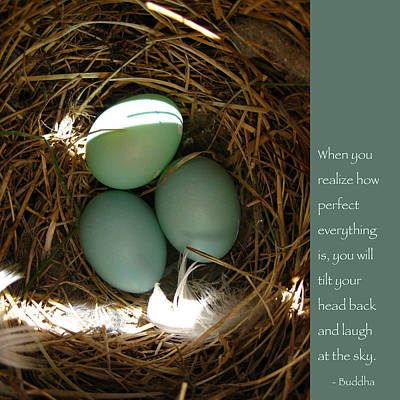 Baby Bird Photograph - Bluebird Eggs With Buddha Quote by Heidi Hermes