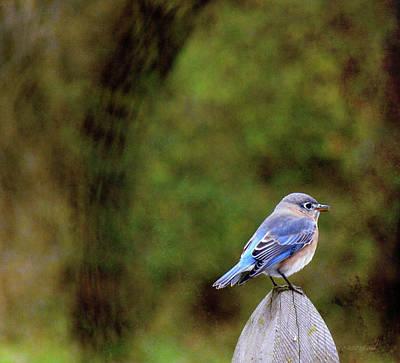 Manipulation Photograph - Bluebird-female by Ericamaxine Price