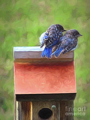 Photograph - Bluebird Fledglings by Sue Melvin