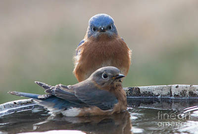 Photograph - Bluebird Gothic by Kevin McCarthy