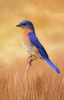 Photograph - Bluebird In The Grass by Jai Johnson