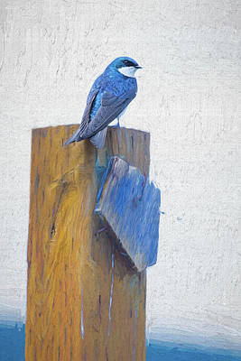 Photograph - Bluebird by James BO Insogna