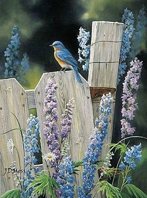 Drawing - Bluebird by Janet Moss
