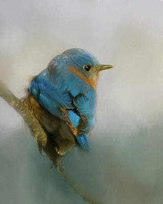 Photograph - Bluebird by Lana Trussell