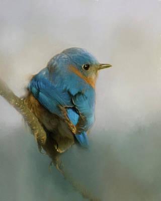 Photograph - Bluebird by Lana Trussell