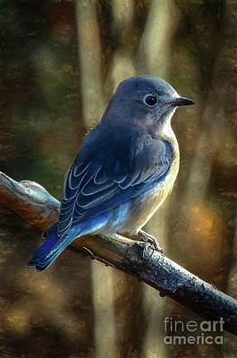 Photograph - Bluebird by Mim White