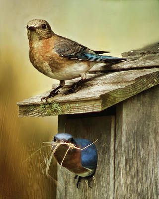 Photograph - Bluebird Nest Building by TnBackroadsPhotos