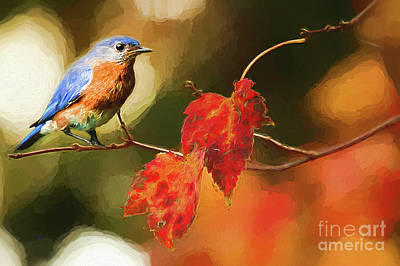 Of Autumn Photograph - Bluebird Of Autumn by Darren Fisher