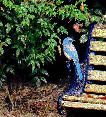 Photograph - Bluebird On A Bench by Michele Avanti