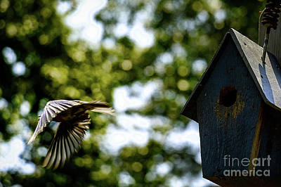 Photograph - Bluebird On A Mission by Mim White