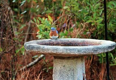 Photograph - Bluebird On Birdbath by Cynthia Guinn