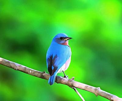 Royalty-Free and Rights-Managed Images - Bluebird On Summer Green by Dan Sproul