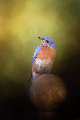 Photograph - Bluebird On The Nest Pole by Jai Johnson