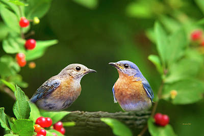 Photograph - Bluebird Pair by Christina Rollo