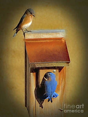 Photograph - Bluebird Parents by Sue Melvin