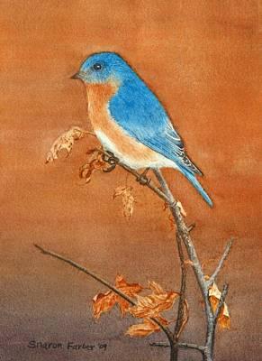 Bluebird Art Print by Sharon Farber