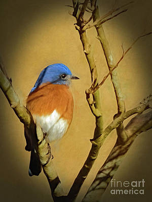 Bluebird Waiting For Spring Art Print