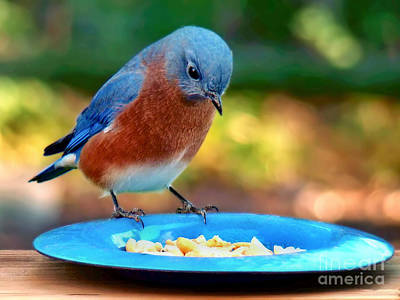 Photograph - Bluebird's Dinner by Sue Melvin