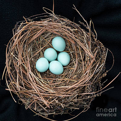 Photograph - Bluebird's Nest by Bonnie Barry