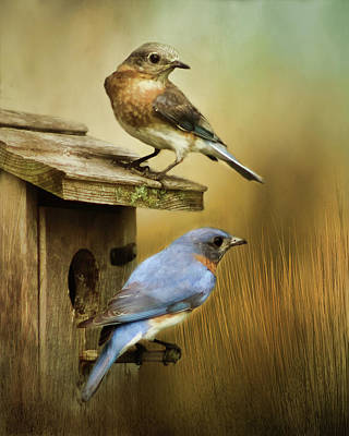 Photograph - Bluebirds Nesting by TnBackroadsPhotos