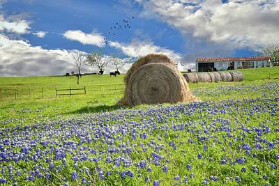 Photograph - Bluebonnet Bales by Lynn Bauer