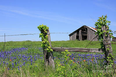 Photograph - Bluebonnet Barn by Jerry Bunger