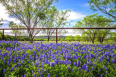 Photograph - Bluebonnet Bliss On The Willow City Loop by Lynn Bauer