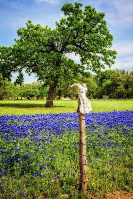 Photograph - Bluebonnet Boot Dreamscape by Lynn Bauer