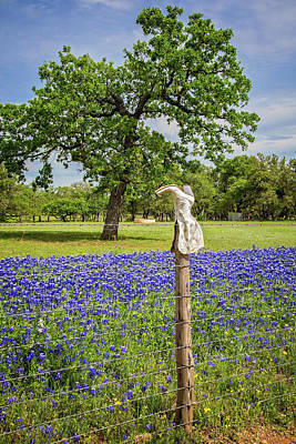 Photograph - Bluebonnet Boot On The Willow City Loop by Lynn Bauer