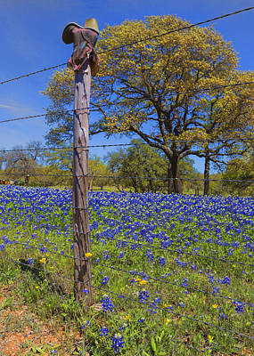 Bluebonnet Boot Post Art Print