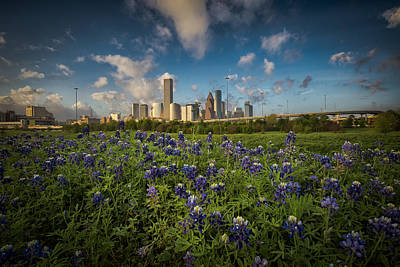 Photograph - Bluebonnet City by Chris Multop