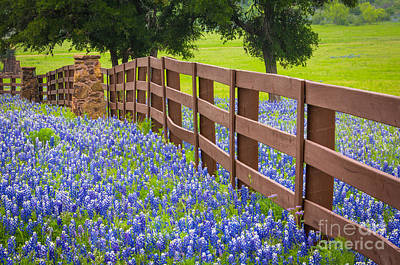Photograph - Bluebonnet Fence by Inge Johnsson