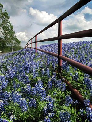 Photograph - Bluebonnet Fenceline by David and Carol Kelly