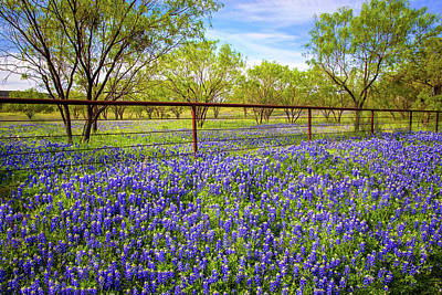 Photograph - Bluebonnet Fenceline On The Willow City Loop by Lynn Bauer