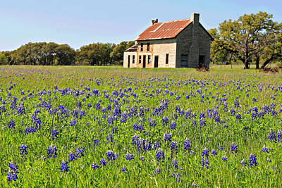 Photograph - Bluebonnet Field by Matalyn Gardner