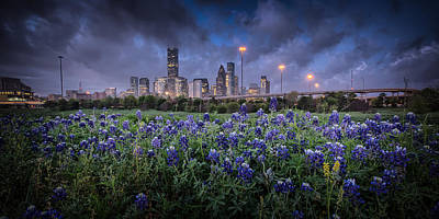Bluebonnet Houston Art Print