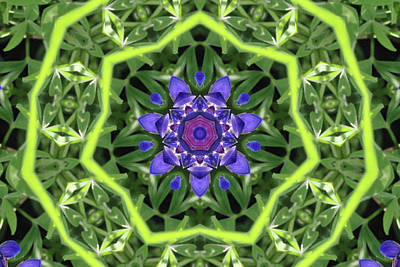 Photograph - Bluebonnet Kaleidoscope by Robyn Stacey