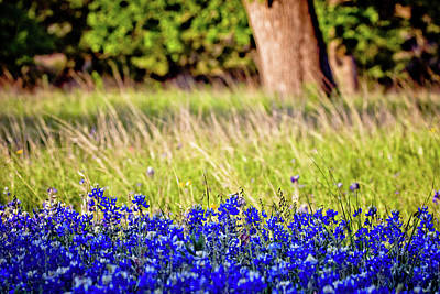 Photograph - Bluebonnet Layers by Linda Unger