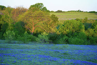 Photograph - Bluebonnet Morning 041618 by Rospotte Photography