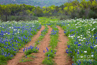 Spring Scenery Photograph - Bluebonnet Ruts by Inge Johnsson