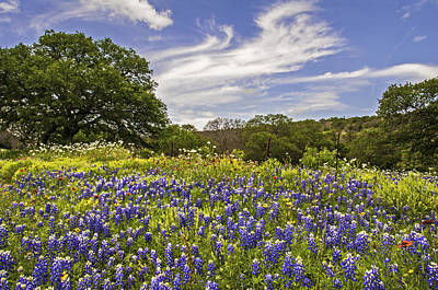 Photograph - Bluebonnet Spring by Lynn Bauer