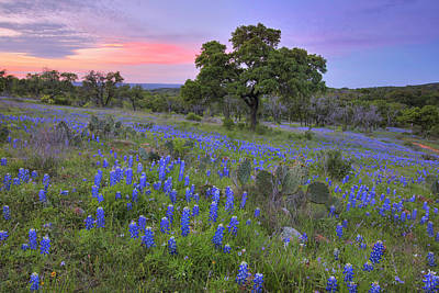 Going Green - Bluebonnet Sunset in the Texas Hill Country 2 by Rob Greebon